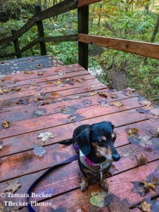 Madison taking a break on the wood staircase at Maquoketa Caves State Park
